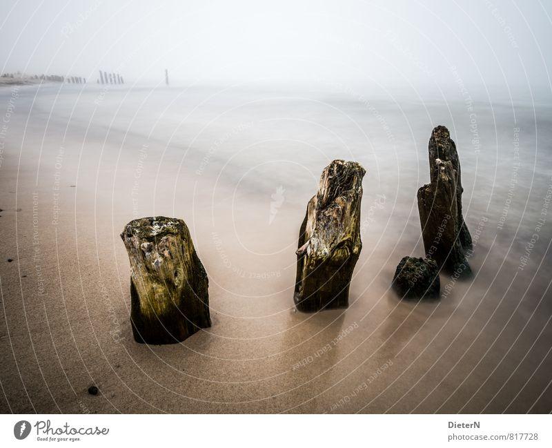 Dunst Strand Meer Sand Frühling Nebel Ostsee blau braun schwarz weiß Kühlungsborn Mecklenburg-Vorpommern Buhne Silhouette Wasseroberfläche Farbfoto Menschenleer