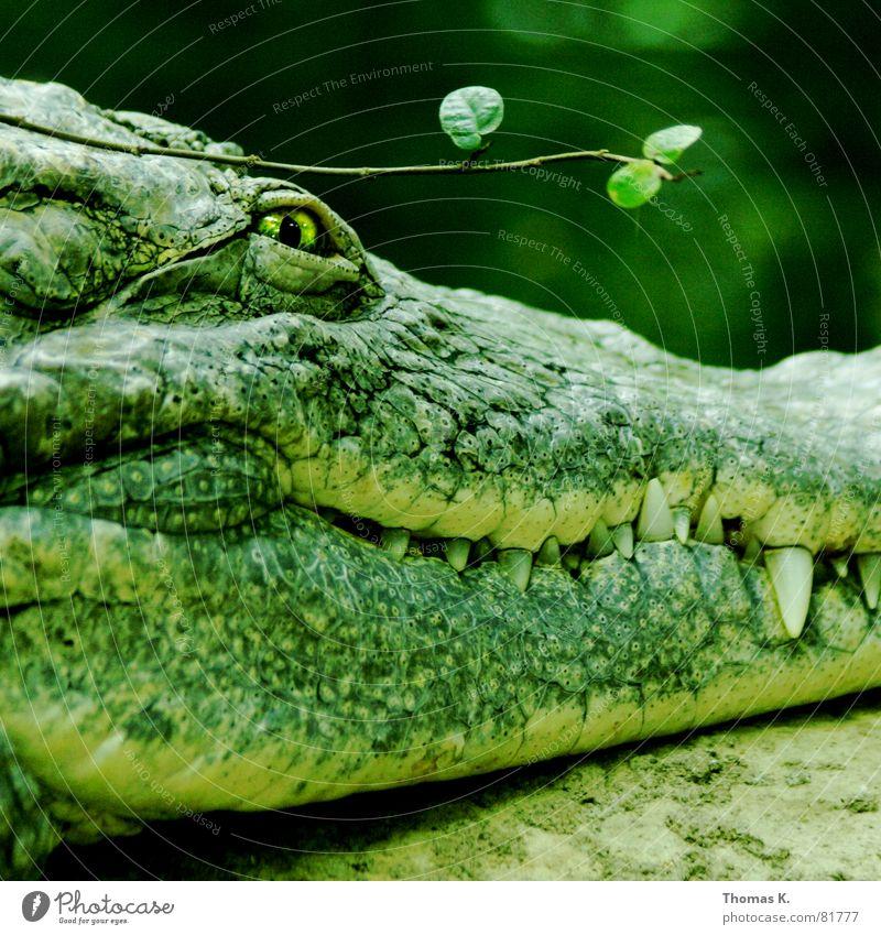 Handtasche grün schön Auge Haut gefährlich bedrohlich Ast Gebiss Stengel Risiko böse Zweig Leder Scheune Aggression Dieb