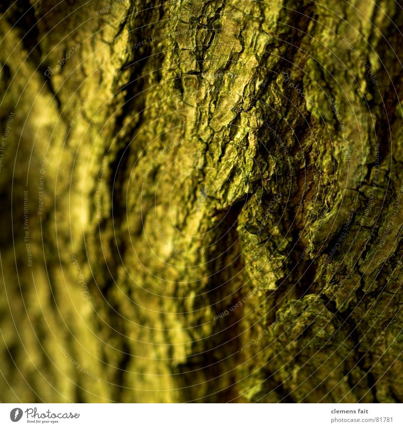Stamm zerbröckelt Baum Baumrinde Falte Holz gelb braun vergangen Vergangenheit Verfall verkrustet Baumstamm