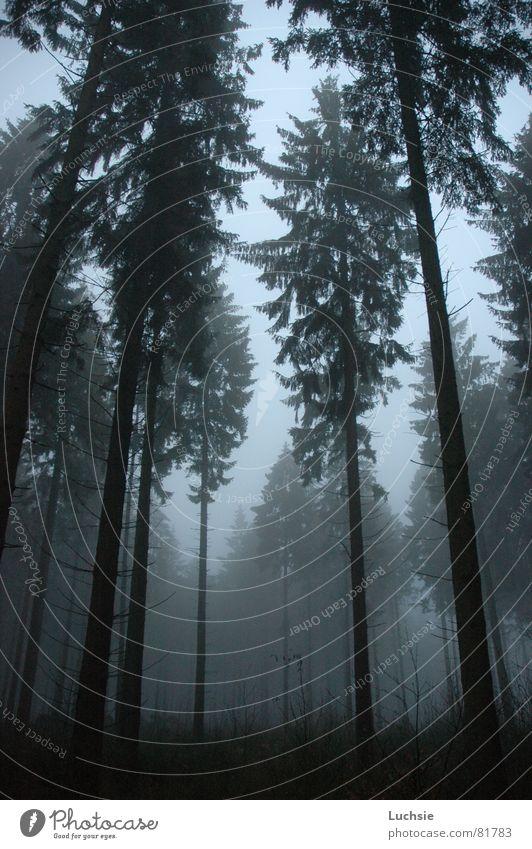 Allein im Wald Baum dunkel Nebel bedrohlich Fichte