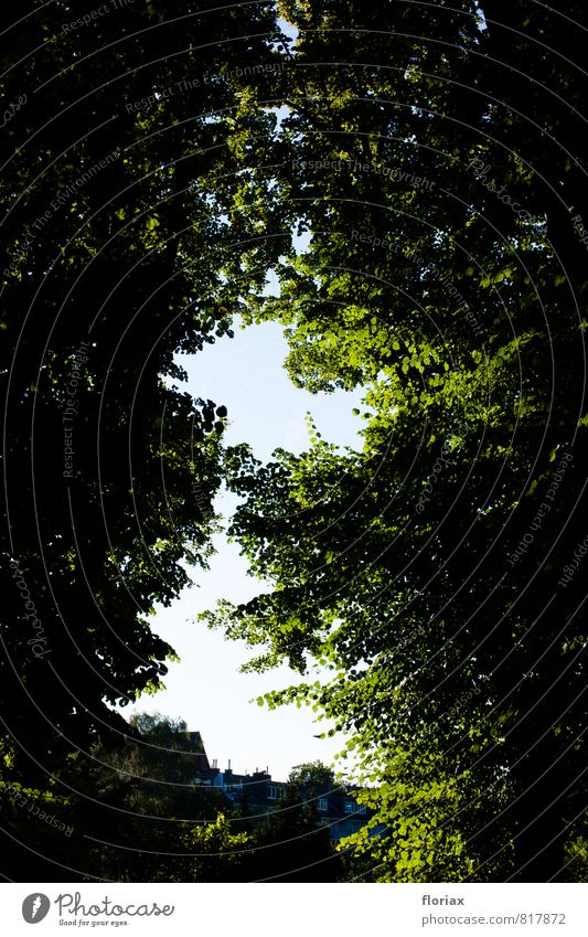 lichtblick Natur Stadt grün Sommer Baum Erholung Blatt ruhig Stadtleben Park Zufriedenheit Lebensfreude Schönes Wetter Hoffnung Sicherheit Vertrauen