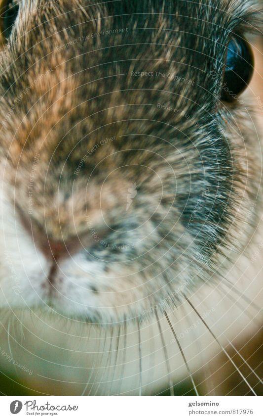 Schnuff schnuff Tier Gesicht Auge natürlich Haare & Frisuren braun Wildtier authentisch niedlich einfach weich Neugier Fell Vertrauen nah Tiergesicht