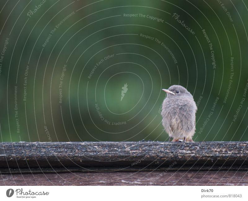 Mama? grün Einsamkeit Tier Tierjunges grau klein Holz Garten braun Vogel Park Angst Wildtier warten niedlich weich