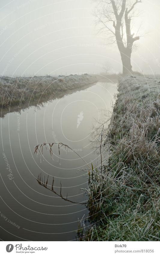Stiller Morgen im Dezember alt grün weiß Sonne Baum Einsamkeit ruhig schwarz Winter dunkel kalt Wiese Gras Tod grau Eis