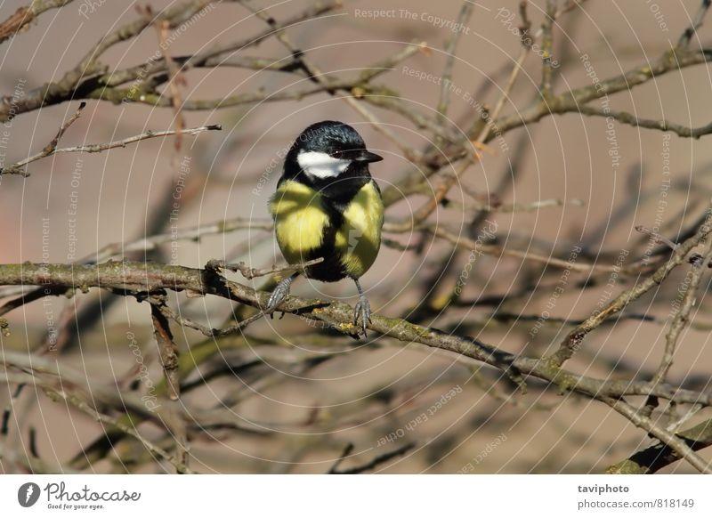 Natur schön Baum Landschaft Tier schwarz Winter Wald Umwelt gelb natürlich klein Garten Vogel wild sitzen