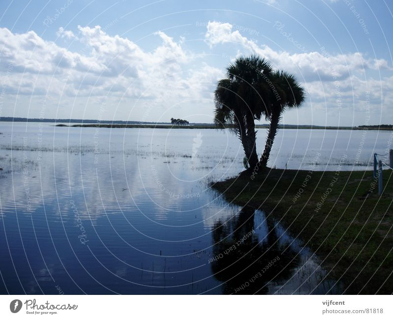 Florida Natur Wasser Landschaft Erde USA Palme Florida Orlando Everglades NP