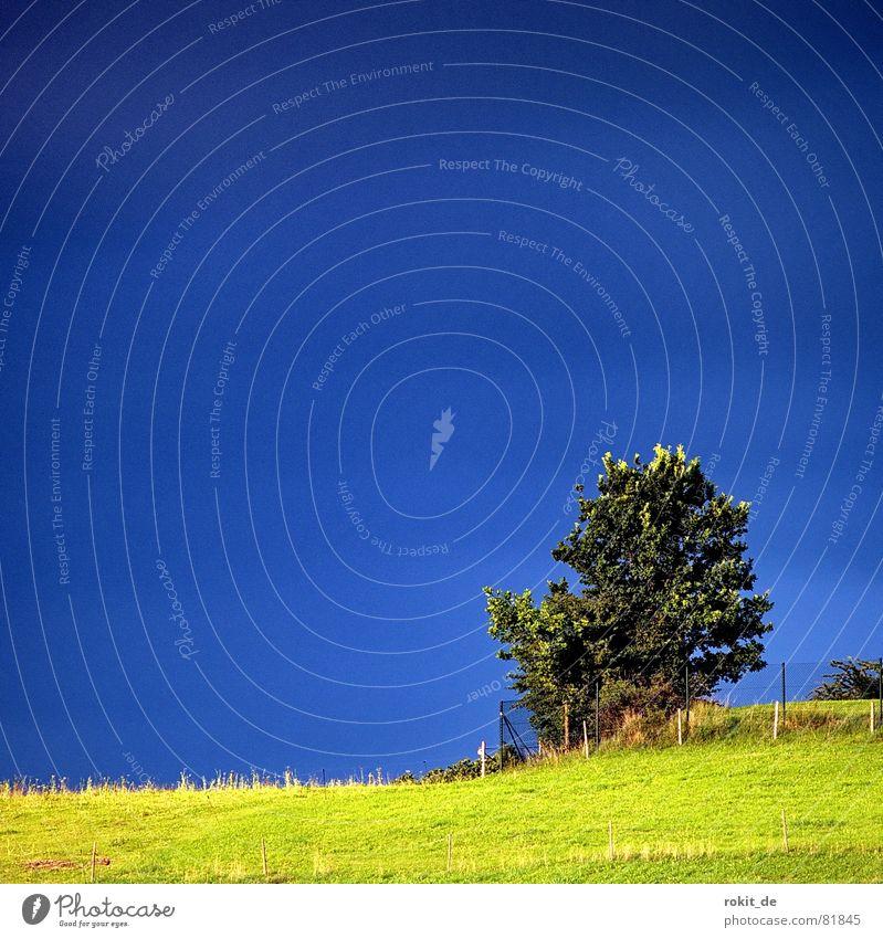 Mein Freund der Baum III Sträucher Wiese Einsamkeit klein Zaun grün Allgäu Gras strahlend Berghang Baumstamm Am Rand Bergkette Hecke Grünfläche Grenze blau