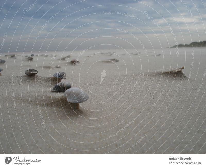 Muschelfeld Langeoog Strand Ferne Sand Küste See Deutschland Erde Wind mehrere Ohr viele Stranddüne Sturm Muschel beige Skelett