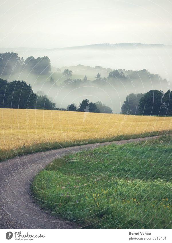rechts ab Umwelt Natur Landschaft Pflanze Sommer Baum Gras Sträucher schön Wege & Pfade Nebel gelb grün Stimmung Kurve Farbfoto Außenaufnahme Menschenleer
