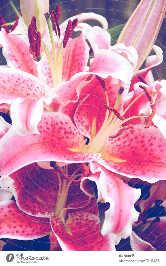 Blumen für Dich Natur Pflanze grün schön weiß Blume Freude gelb Liebe Gefühle Stimmung rosa Geburtstag Romantik Blumenstrauß Valentinstag