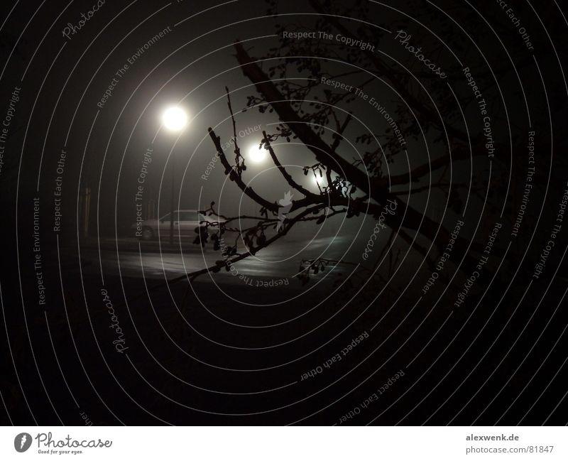 3 Monde Baum Nacht Nebel dunkel schwarz Laterne Parkplatz unheimlich nass kalt harmonisch ruhig schlafen Fahrbahn PKW außergewöhnlich frisch Gefühlskälte