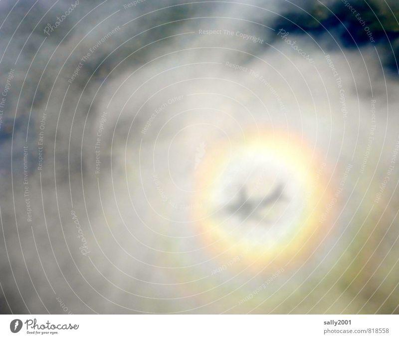 prepare for landing... Wolken Sonnenlicht Luftverkehr Flugzeug Passagierflugzeug Flugzeugausblick fliegen außergewöhnlich fantastisch träumen Angst Abenteuer