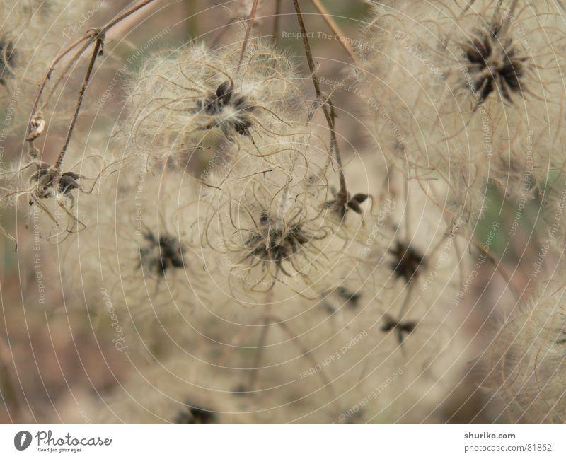 Flora elegant Freiheit Umwelt Natur Pflanze Baum Blume Gras Weiche Netz klein weich Leichtigkeit behutsam beige Botanik sensibel zerbrechlich geschmeidig leicht