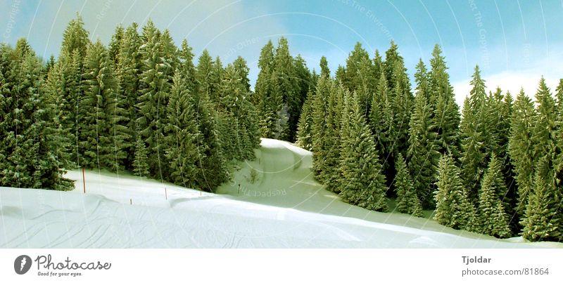Esto ha pasado a la historia - Schnee von gestern Natur Himmel weiß Baum grün blau Winter Ferien & Urlaub & Reisen Einsamkeit Wald kalt Schnee Berge u. Gebirge Landschaft Luft Eis