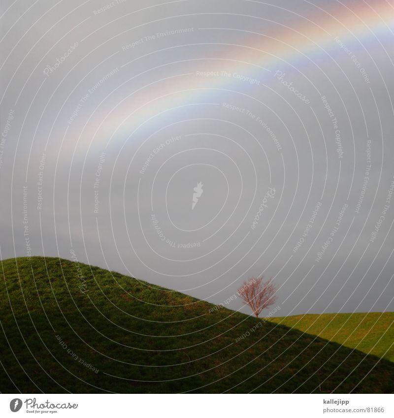 lost in paradise Himmel grün Baum Erholung Landschaft Wiese Gras Religion & Glaube Garten Kunst Park Regen gut Hoffnung Wunsch Rasen