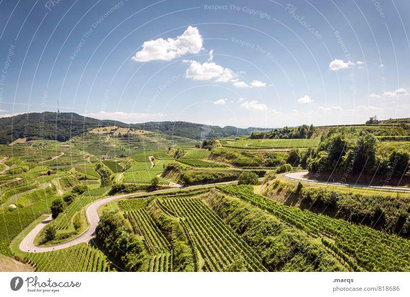K 4922 Natur Landschaft Pflanze Himmel Horizont Sommer Herbst Klima Schönes Wetter Weinbau Weinberg Verkehrswege Straße Kurve schön Stimmung Kaiserstuhl