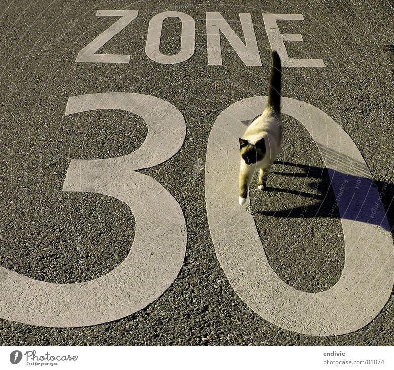 catwalk Katze Zone Geschwindigkeit Tier Asphalt Teer Tempo 30 30er Zone Freizeit & Hobby Straße Rasen