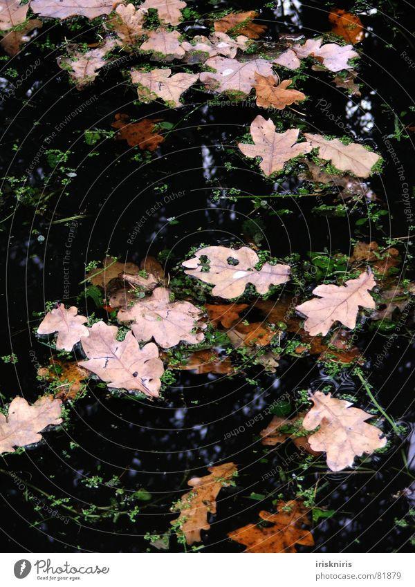Blattwerk I See Herbst Teich dunkel trocken Reflexion & Spiegelung grün schwarz Wasser mögen wehen Natur Wind Im Wasser treiben