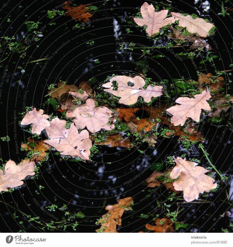 Blattwerk II See Herbst Teich dunkel trocken Reflexion & Spiegelung grün schwarz Wasser mögen wehen Natur Wind Im Wasser treiben