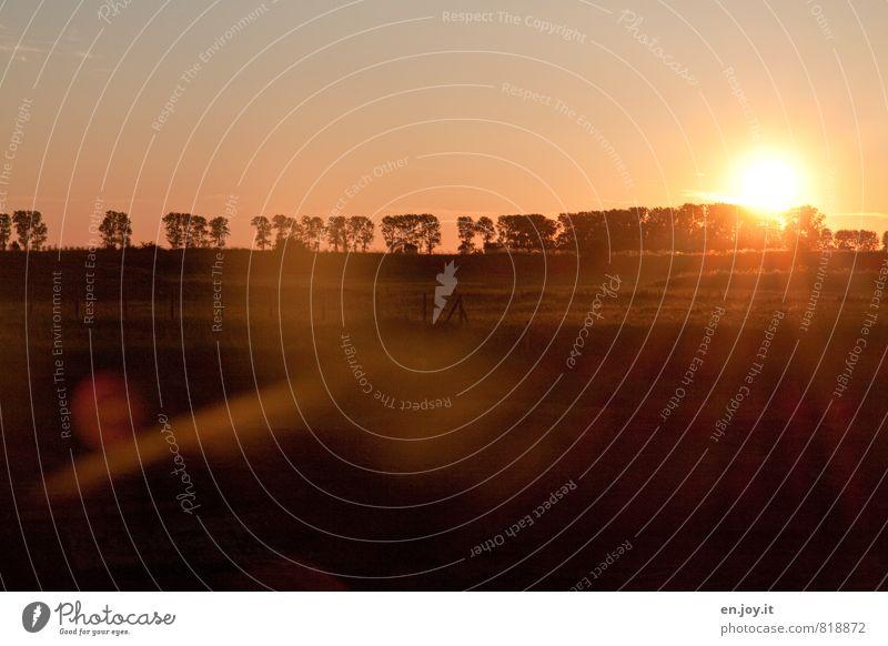 Golden Hour Natur Landschaft Himmel Sonnenaufgang Sonnenuntergang Sonnenlicht Sommer Klima Schönes Wetter Baum Gras Wiese heiß Wärme orange schwarz Stimmung