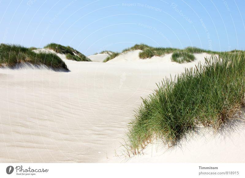 Eine Düne. Ferien & Urlaub & Reisen Umwelt Natur Landschaft Pflanze Urelemente Sand Himmel Wolkenloser Himmel Sommer Schönes Wetter Dünengras Nordsee Stranddüne