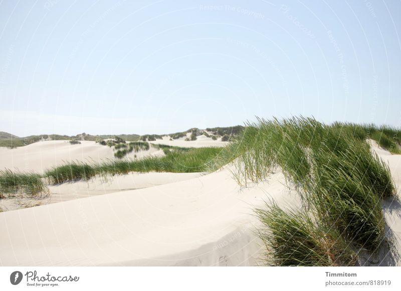 Noch `ne Düne. Himmel Natur Ferien & Urlaub & Reisen blau Pflanze grün Sommer Landschaft Umwelt Gefühle natürlich Sand Zufriedenheit authentisch ästhetisch