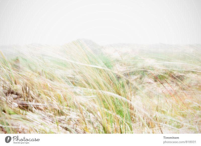 Windig. Natur Ferien & Urlaub & Reisen Pflanze grün Landschaft Umwelt Bewegung Gefühle natürlich grau Wind ästhetisch einfach Düne Dänemark