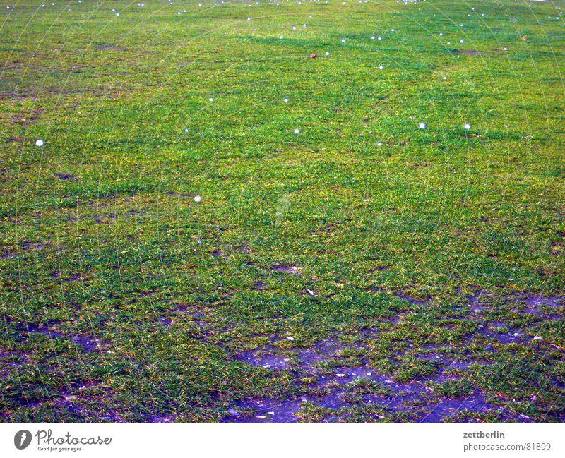 Landbild für carlitos grün Wiese Spielen Gras Erde Ball Weide Landwirtschaft Sportrasen Golf Grundbesitz Ackerbau 9 Grasnarbe Ballsport Golfball