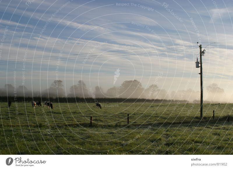 Herbstnebel Nebel Rind Kuh Fressen Weide Wiese Strommast Sonnenaufgang Freundlichkeit Wolken Erholung Außenaufnahme Gras Nebelschleier Schleier grün dunboyne