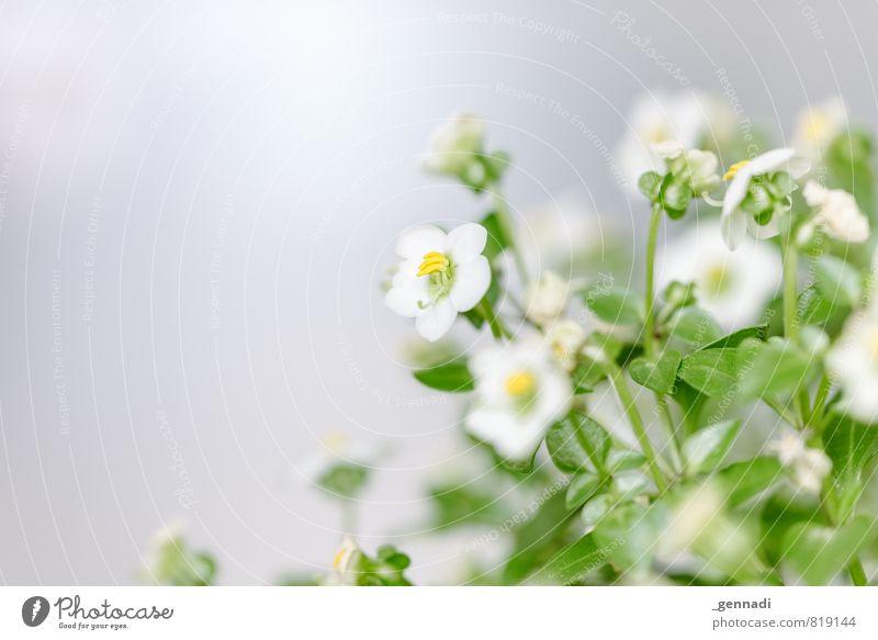 Grün Pflanze Baum Erholung ruhig Blüte Frühling frisch Blühend Duft sanft