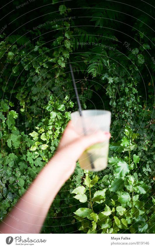 Caipi Ferien & Urlaub & Reisen Sommer Hand Feste & Feiern Party Musik Glas frisch Getränk trinken Veranstaltung Bar Erfrischung exotisch Restaurant Club