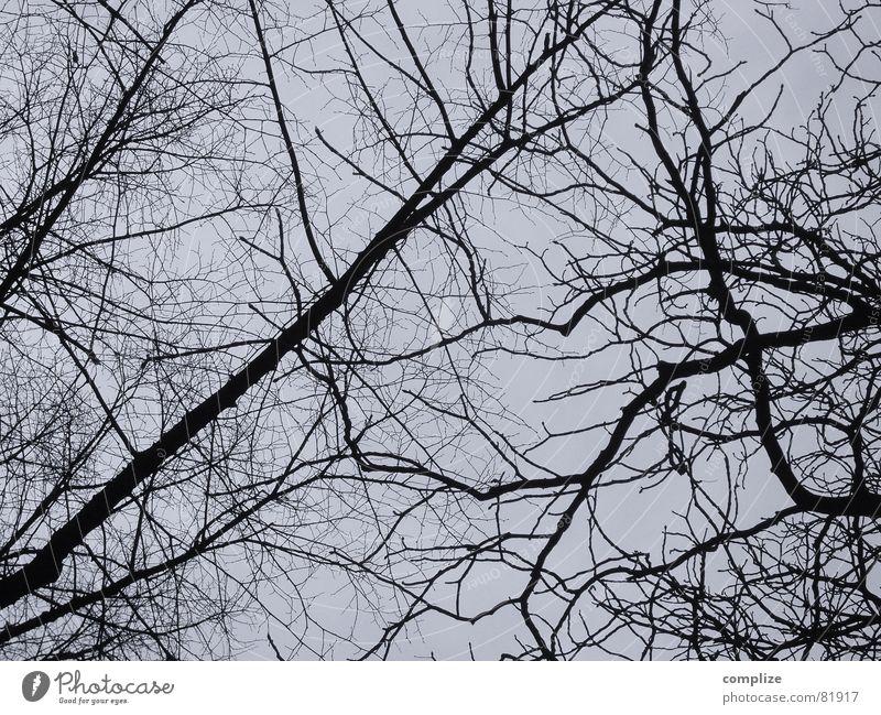 geteilt resignieren Baum Blatt Pflanze Winter Pflanzenteile Botanik Geäst grau dunkel durcheinander chaotisch keine Ast Zweig Natur schwaz-weiß Kriminalroman