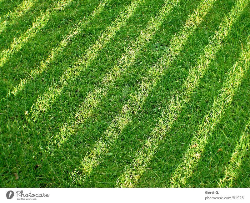 Grünstreifen Natur grün Sommer Freude dunkel Wiese Gras Park Rasen Streifen Halm diagonal Schönes Wetter gestreift Gartengeräte Grünpflanze