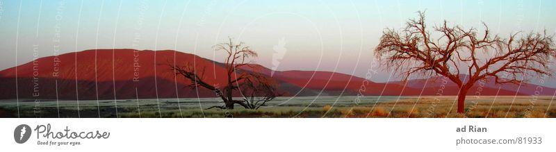 sunrise at namib desert... Baum rot Ferne Sand Sonnenaufgang Afrika Wüste beige Panorama (Bildformat) Safari Ödland Namibia Warmes Licht Warme Farbe
