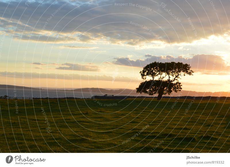 summer dream Umwelt Natur Landschaft Pflanze Wolken Sonnenaufgang Sonnenuntergang Sonnenlicht Schönes Wetter Baum Garten Park Feld ästhetisch authentisch