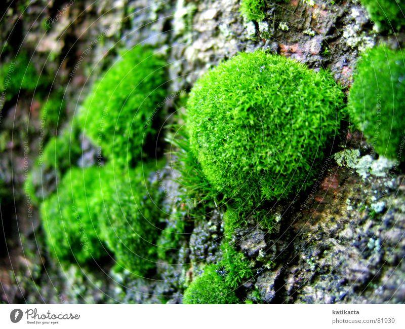 moos Natur grün Baum Umwelt Gefühle Spaziergang weich zart Baumstamm Moos Baumrinde Waldlichtung Waldwiese
