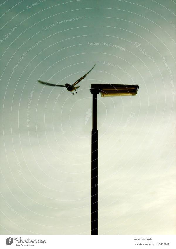 VERGISS MICH NICHT sitzen Eindruck Laterne Lampe Licht Vogel Tier besinnlich Einsamkeit grau ruhig Himmel Straßenbeleuchtung Menschenleer dezent Gefühle Frieden