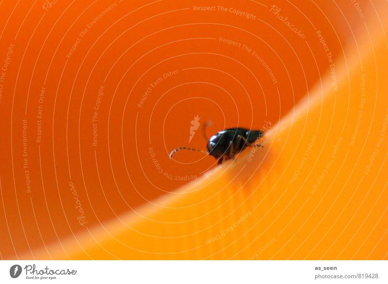 Komischer Käfer Tier 1 Kunststoff hocken krabbeln ästhetisch Fröhlichkeit klein rund orange schwarz Freude Lebensfreude Farbe Insekt Fühler Wege & Pfade