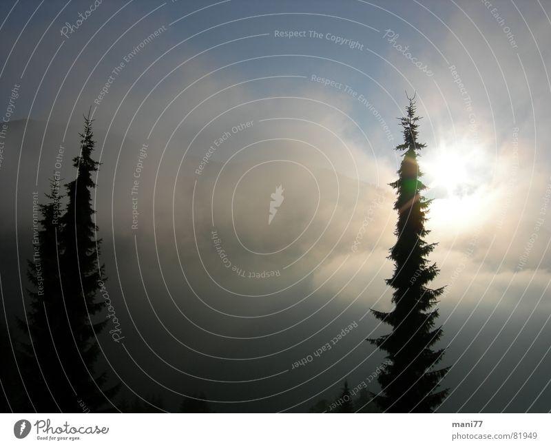 Naturschauspiel Himmel Baum Sonne blau Wolken dunkel grau Traurigkeit Stimmung Nebel fantastisch Tanne mystisch Lichtspiel Schleier