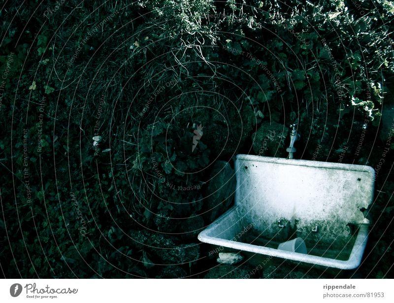 verfallenes waschbecken alt kalt Herbst Mauer Wasserhahn Waschbecken Kletterpflanzen