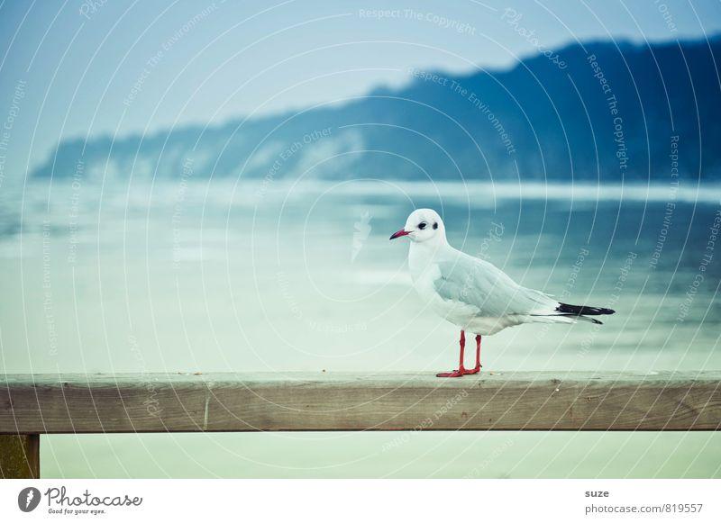 Man findet keine Freunde mit Salat ... ruhig Meer Winter Umwelt Natur Tier Himmel Horizont Küste Ostsee Wildtier Vogel Holz stehen warten kalt klein lustig