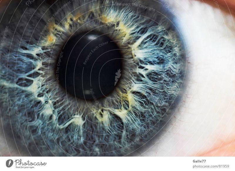 Iris blau Auge Anschnitt Pupille Makroaufnahme Regenbogenhaut Gesichtsausschnitt