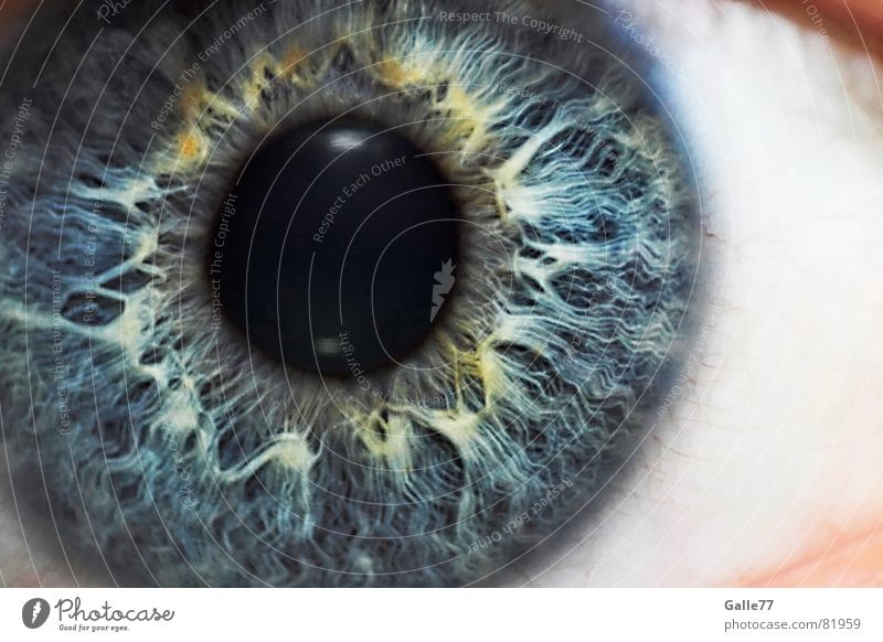 Iris Pupille Regenbogenhaut Auge Makroaufnahme Nahaufnahme Strukturen & Formen Blick blau Anschnitt Detailaufnahme Gesichtsausschnitt