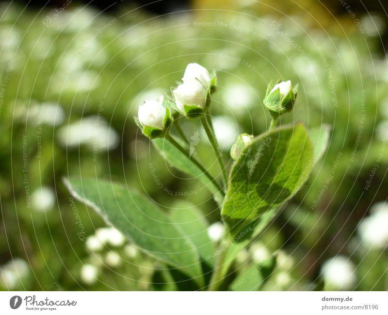 Frühling... Blume gelb