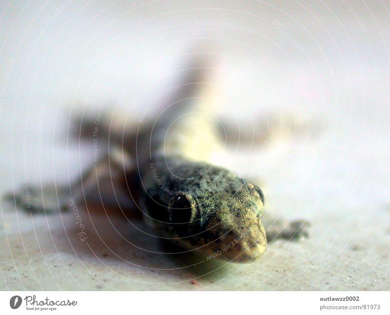 Gecko Ferien & Urlaub & Reisen Tier Reptil Lurch Stechmücke Echsen Indonesien Echte Eidechsen