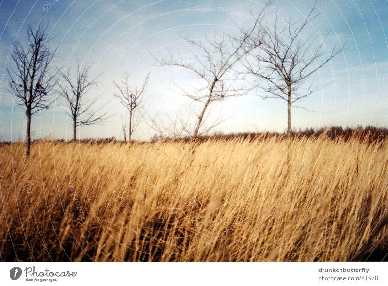 vor dem sturm Baum Einsamkeit Wiese Feld Stroh Gras Baumstamm beige Horizont abgelegen Mangel Winter Waldwiese Ast Himmel blau Wind karg Landschaft Ferne wenige
