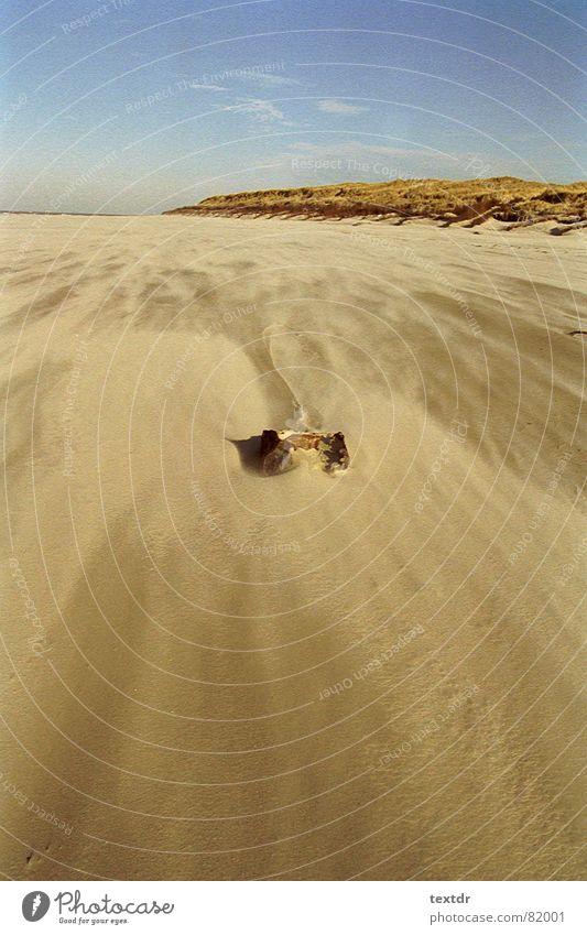strandsturm Strand Sturm Meer Strandgut beige Sandverwehung Küste Wind Himmel blau Stranddüne