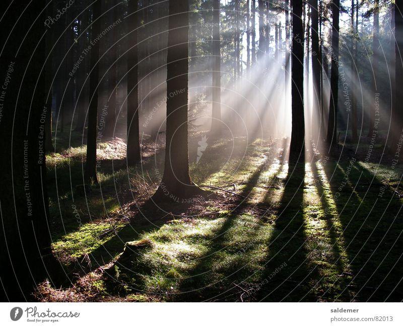 Zauberwald Baum Wald Stimmung Nebel Zauberei u. Magie Lichtstrahl