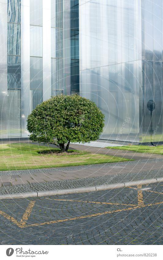 ohne titel Umwelt Natur Baum Gras Stadt Stadtzentrum Hochhaus Platz Bauwerk Gebäude Architektur Fassade Verkehrswege Wege & Pfade Wachstum Wandel & Veränderung