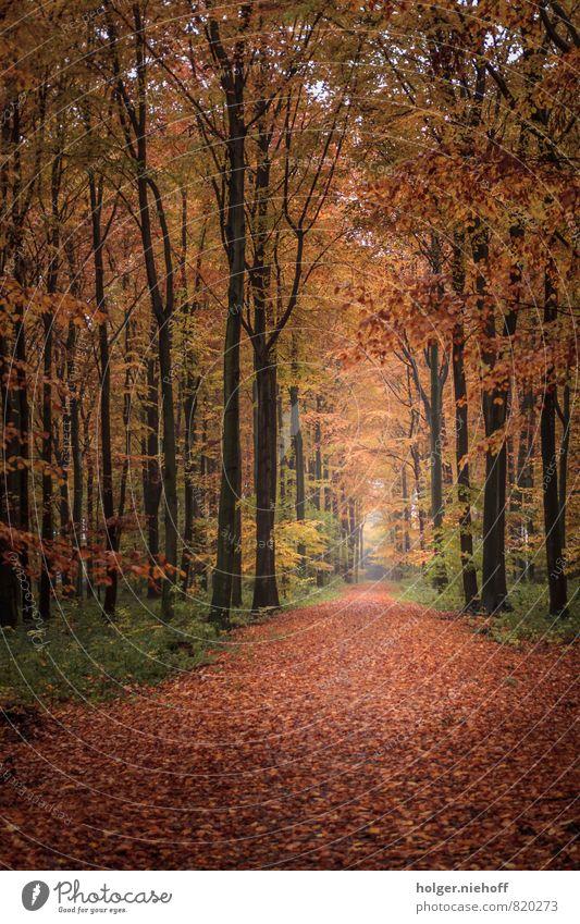 Herbstwald Natur grün Baum rot Ferne Wald kalt gelb Wege & Pfade Holz Freiheit braun Horizont Park gold